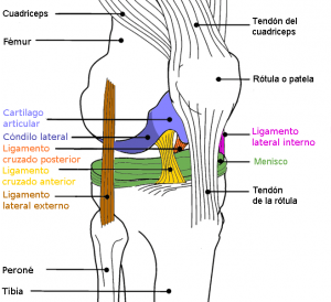 Rodillera ligamentos